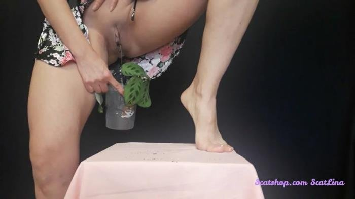 Big pile, New scat, Scatting Girl, Shitting Ass (I plant a flower and fertilize it - FullHD 1080p) [mp4 / 339 MB]